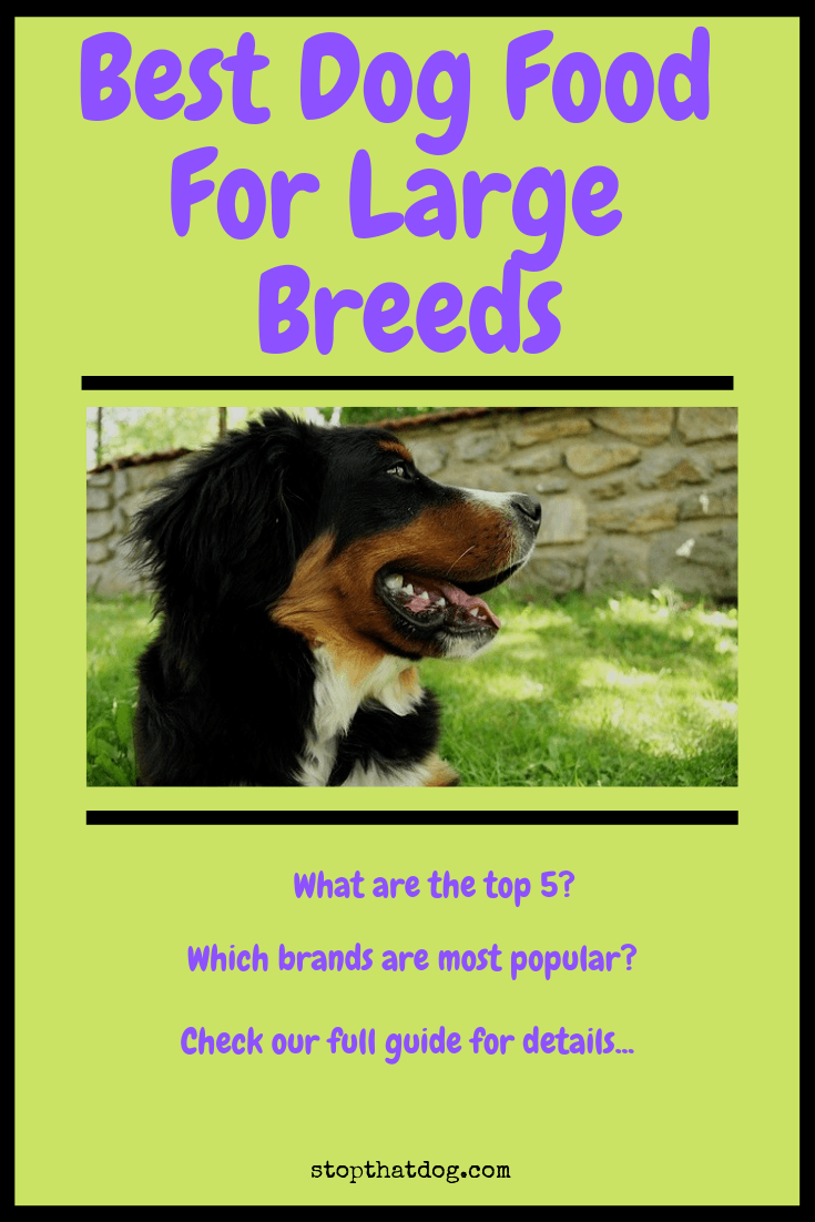 Looking to buy the best dog food for a large breed dog? If so, our guide reveals some of the top options that dog owners love.
