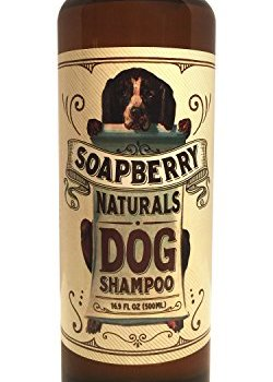 What's The Best Dog Shampoo For Odor? 4