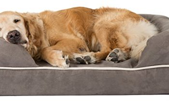 What's The Best Orthopedic Memory Foam Dog Bed? Our Complete Guide 4