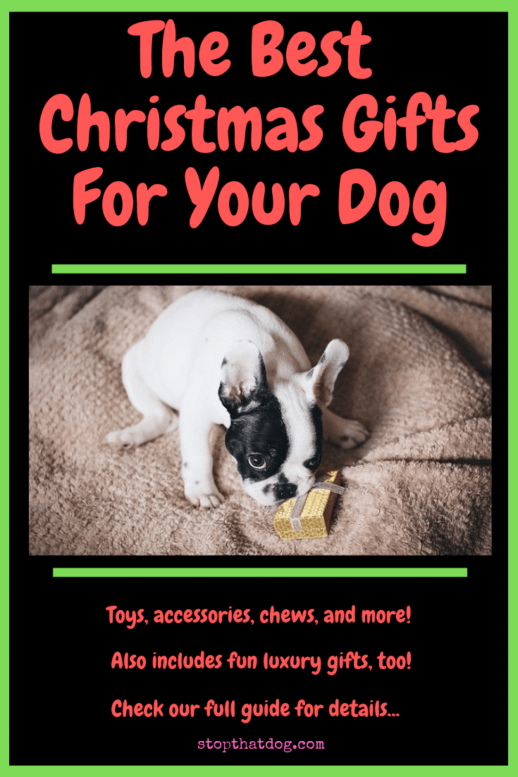 The Best Christmas Gifts For Your Dog - An In-Depth Guide - Stop ...