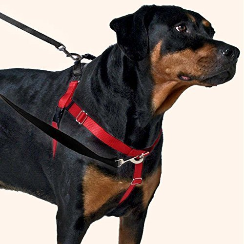 The Best Leashes And Harnesses For Dogs That Pull - The Right Leash