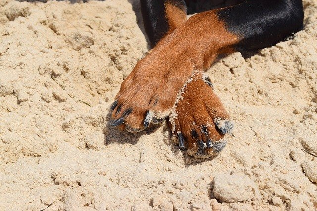How To Trim Your Dog's Nails – Here's Our Comprehensive Guide 4