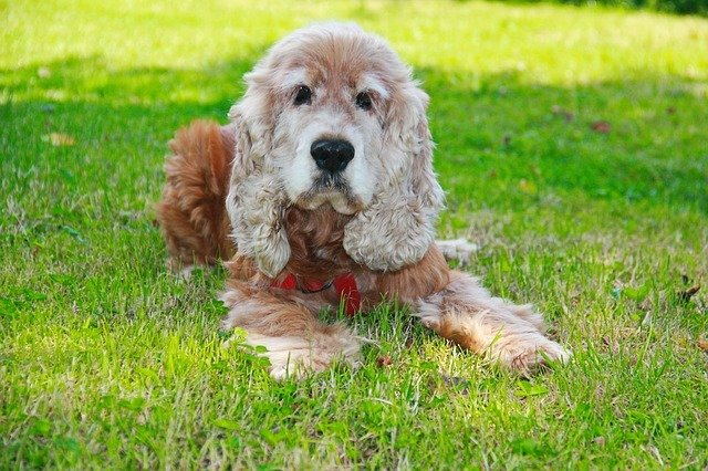Why Is My Dog Eating Grass? Causes & Solutions 3