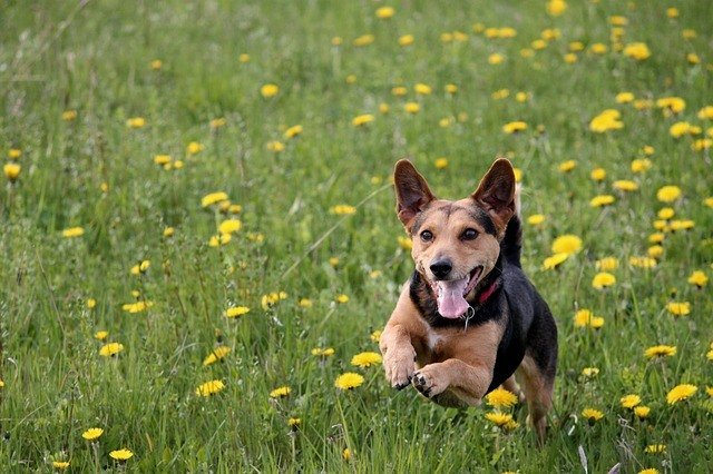 How To Run With Your Dog - An In-Depth Guide 4
