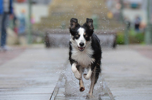 How To Run With Your Dog - An In-Depth Guide 1