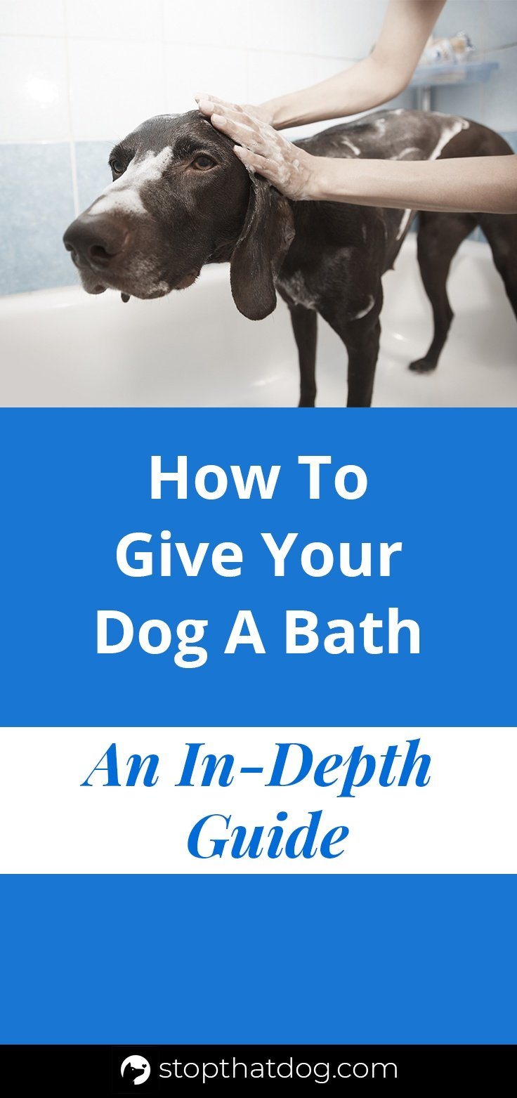 Want to know how to give your dog a bath? If so, our guide reveals everything you\'ll need to know, along with how to keep your dog calm and relaxed.