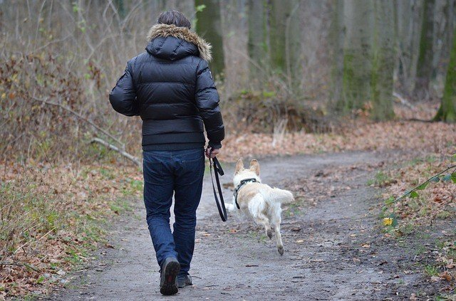 How To Run With Your Dog - An In-Depth Guide 2