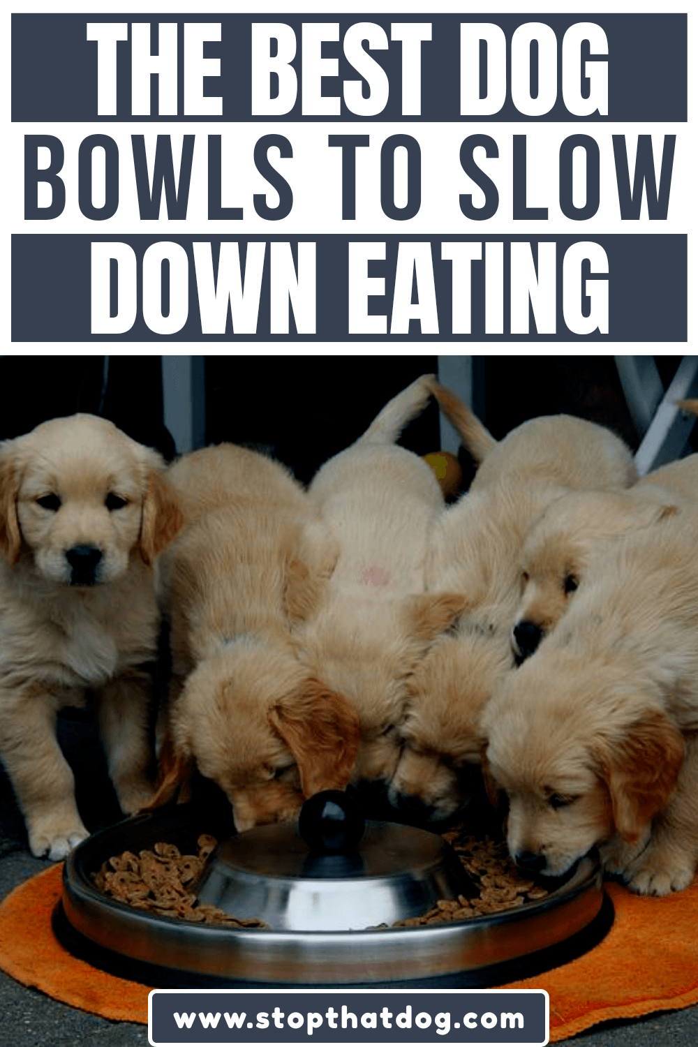 Dog eating too fast? Slow feeder bowls can help. Our guide reveals the best slow feeding dog bowls on the market. Pick one of these and you can\'t go wrong.