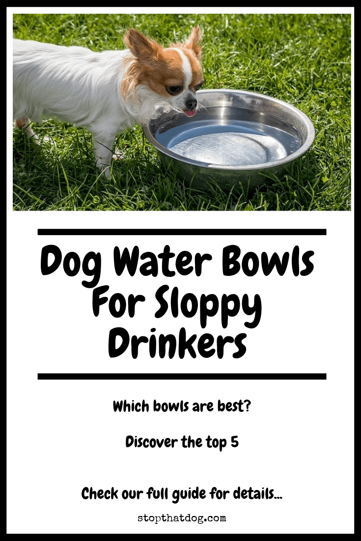 Looking for the best dog water bowls for sloppy drinkers? If so, our guide reveals the top options on the market.