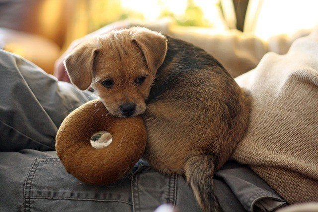 Why Do Dogs Like Squeaky Toys? 2