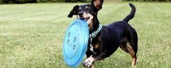 What Are The Best Dog Frisbees & Flying Discs? Our Top Choices 37