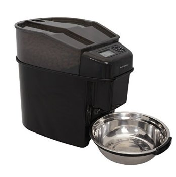 What's The Best Automatic Dog Feeder? Check Our Top Picks 1