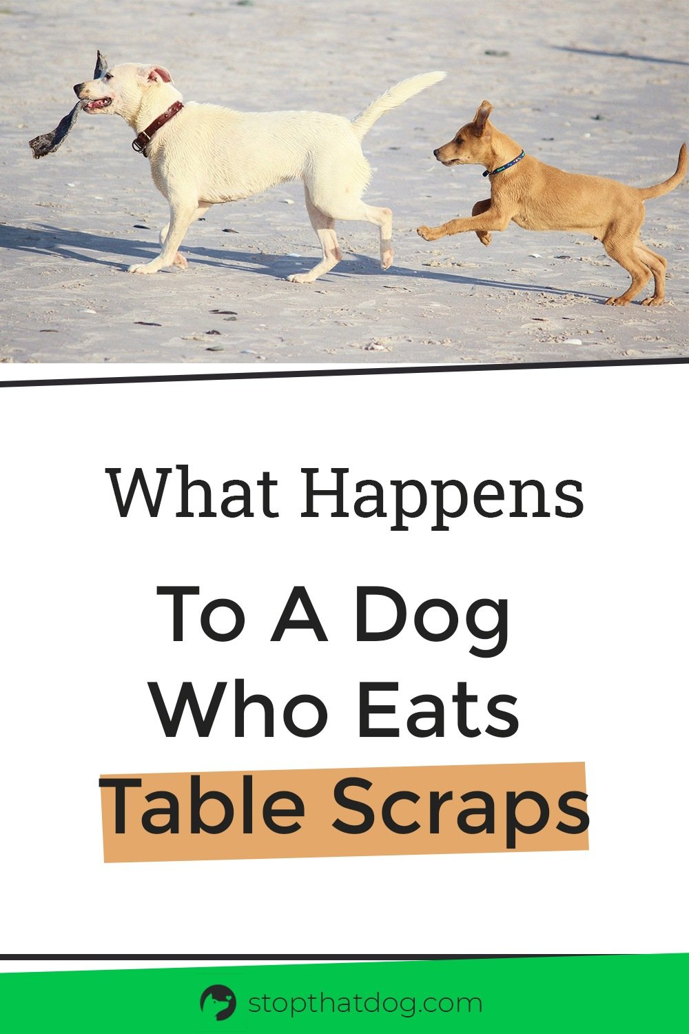 Should you give your dog table scraps? Our guide shows which scraps are safe and which aren\'t.
