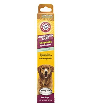 What's The Best Dog Toothpaste? Our Top Picks 4