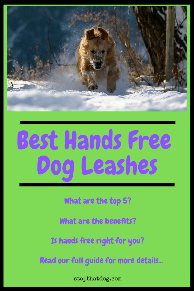 Looking for the best hands free dog leash? If so, this guide reveals the top options on the market and explores the benefits of using a hands free design.