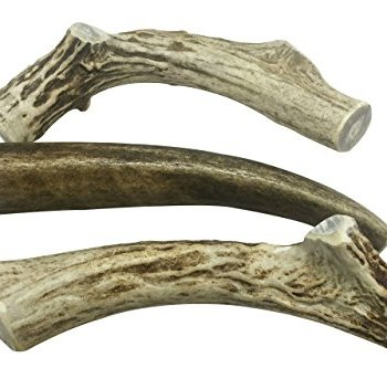 What Are The Best Elk & Deer Antlers For Dogs? Your Essential Guide 22