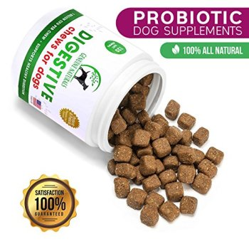 What Are The Best Probiotics For Dogs? Your Essential Guide 13