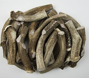 What Are The Best Elk & Deer Antlers For Dogs? Your Essential Guide 30