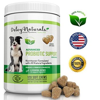 What Are The Best Probiotics For Dogs? Your Essential Guide 20