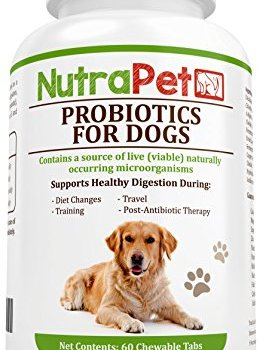 What Are The Best Probiotics For Dogs? Your Essential Guide 23