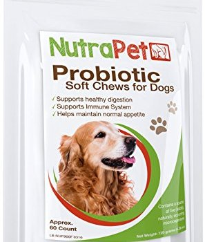 What Are The Best Probiotics For Dogs? Your Essential Guide 36