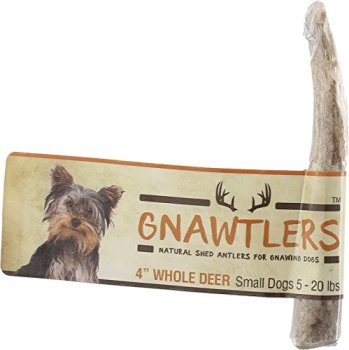 What Are The Best Elk & Deer Antlers For Dogs? Your Essential Guide 26