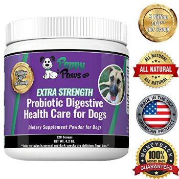 What Are The Best Probiotics For Dogs? Your Essential Guide 16