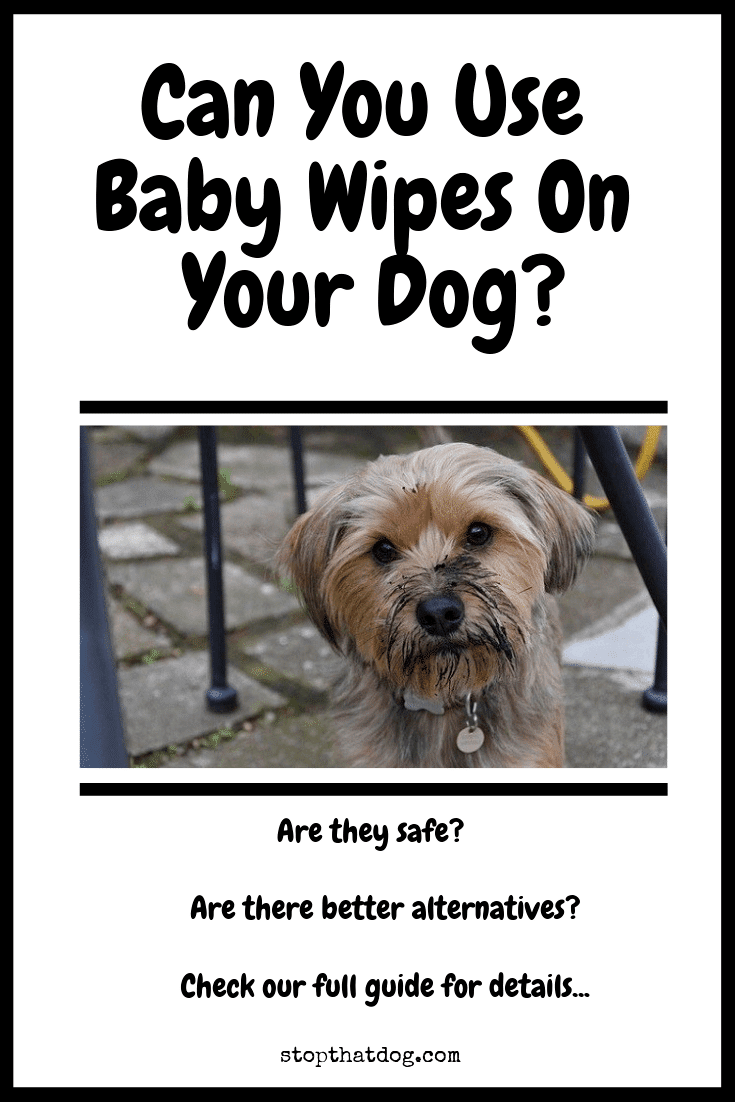 Wondering whether it\'s safe to use baby wipes on dogs? If so, our guide highlights a few key things you\'ll need to know, and shows you some alternatives.