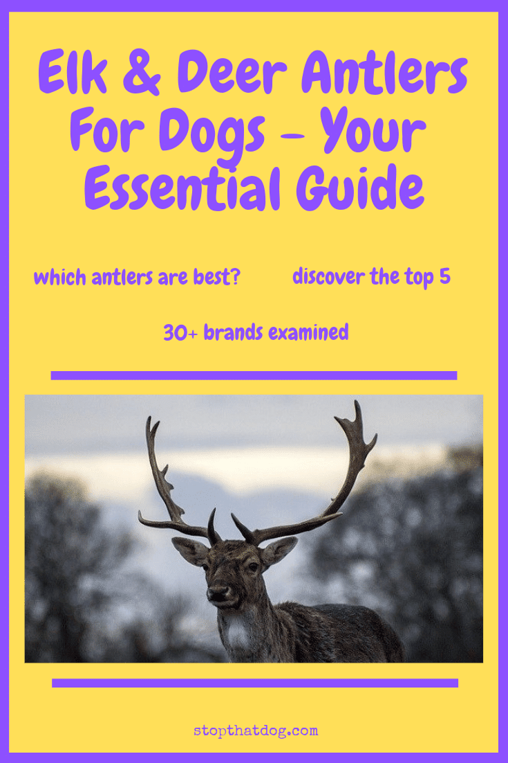 Interested in giving elk or deer antlers to your dog? If so, this buyer\'s guide will show you the best options currently on the market.