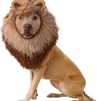 Where Can I Find A Lion Mane Dog Costume? Here's The Best 4