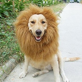 Where Can I Find A Lion Mane Dog Costume? Here's The Best 6