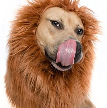 Where Can I Find A Lion Mane Dog Costume? Here's The Best 1
