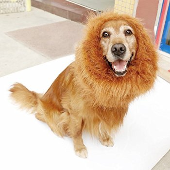 Where Can I Find A Lion Mane Dog Costume? Here's The Best 17