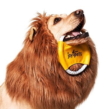 Where Can I Find A Lion Mane Dog Costume? Here's The Best 11
