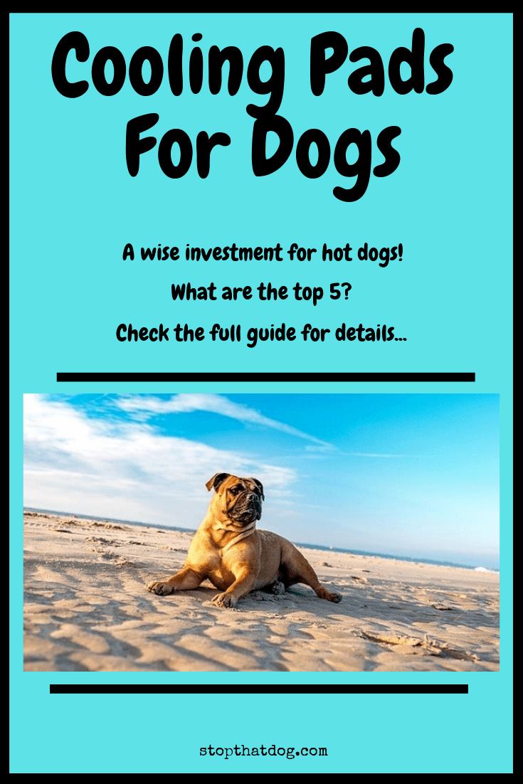 Looking to buy a cooling pad for your dog? They\'re a great investment for keeping your dog cool in hot weather. Our guide reveals the top 5.