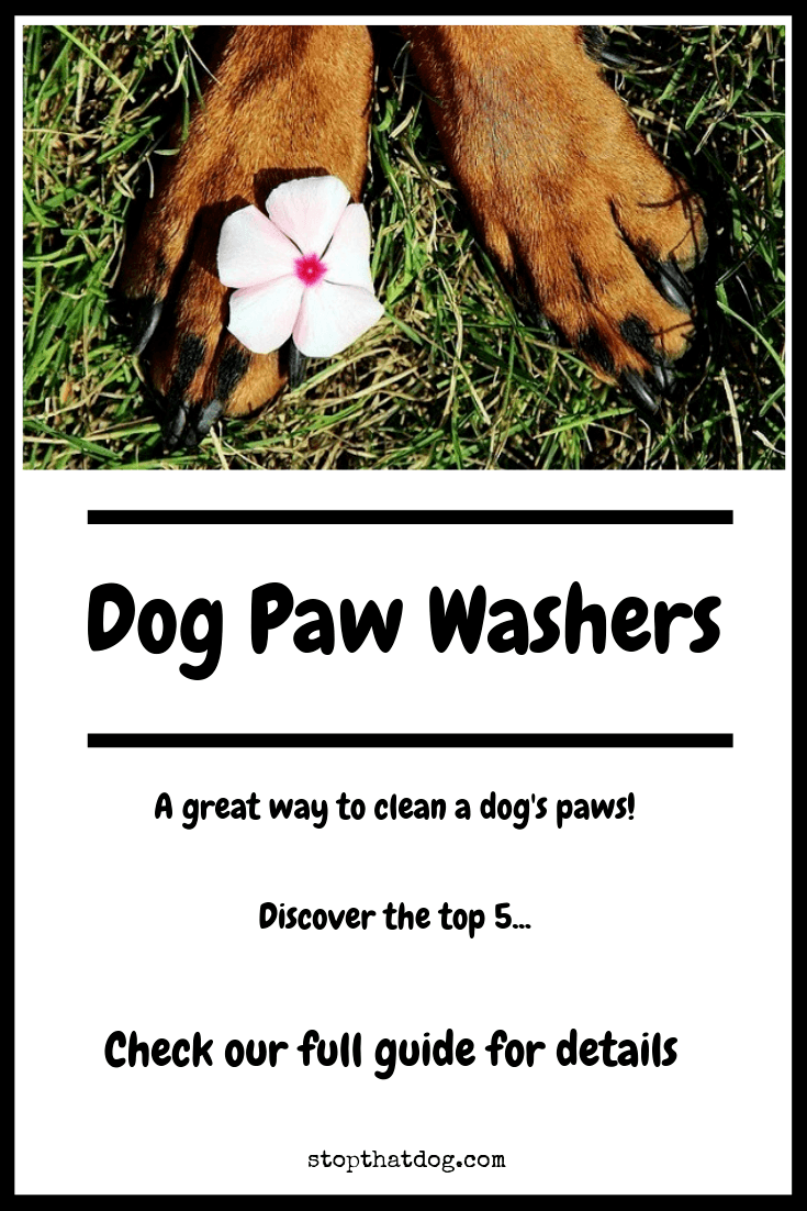Looking for a dog paw washer to clean muddy paws? Or does your dog have ticklish feet? Either way, a paw washer is a great buy. Our guide reveals the top 5.