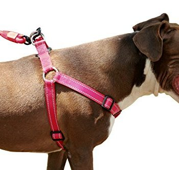 What's The Best Step-In Dog Harness? 12