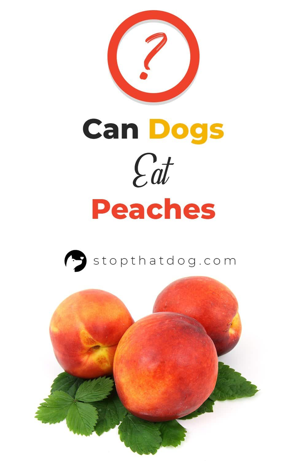 Are you wondering whether dogs can eat peaches? If so, this guide reveals the answers you\'re looking for.