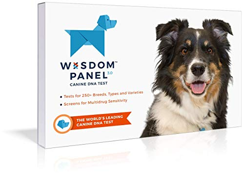 What Are The Best Dog DNA Tests On The Market? 2