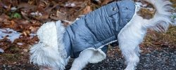 Waterproof Raincoats For Dogs - The Definitive Guide (2020) 11
