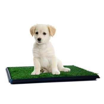 What's The Best Artificial Grass For Dogs? Our Ultimate Guide (2020) 11