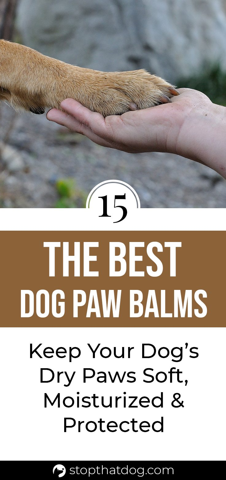 Want to keep your dog\'s feet safe and protected? If so, using the best dog paw balms can go a long way toward helping your furry friend out. This guide reveals the top dog paw balms on the market.