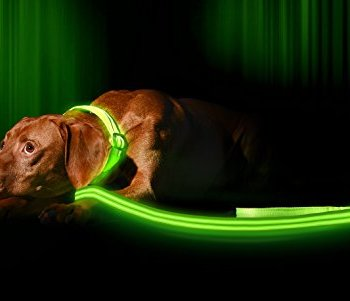The Best LED Dog Collars - Our In-Depth Guide (2020) 2