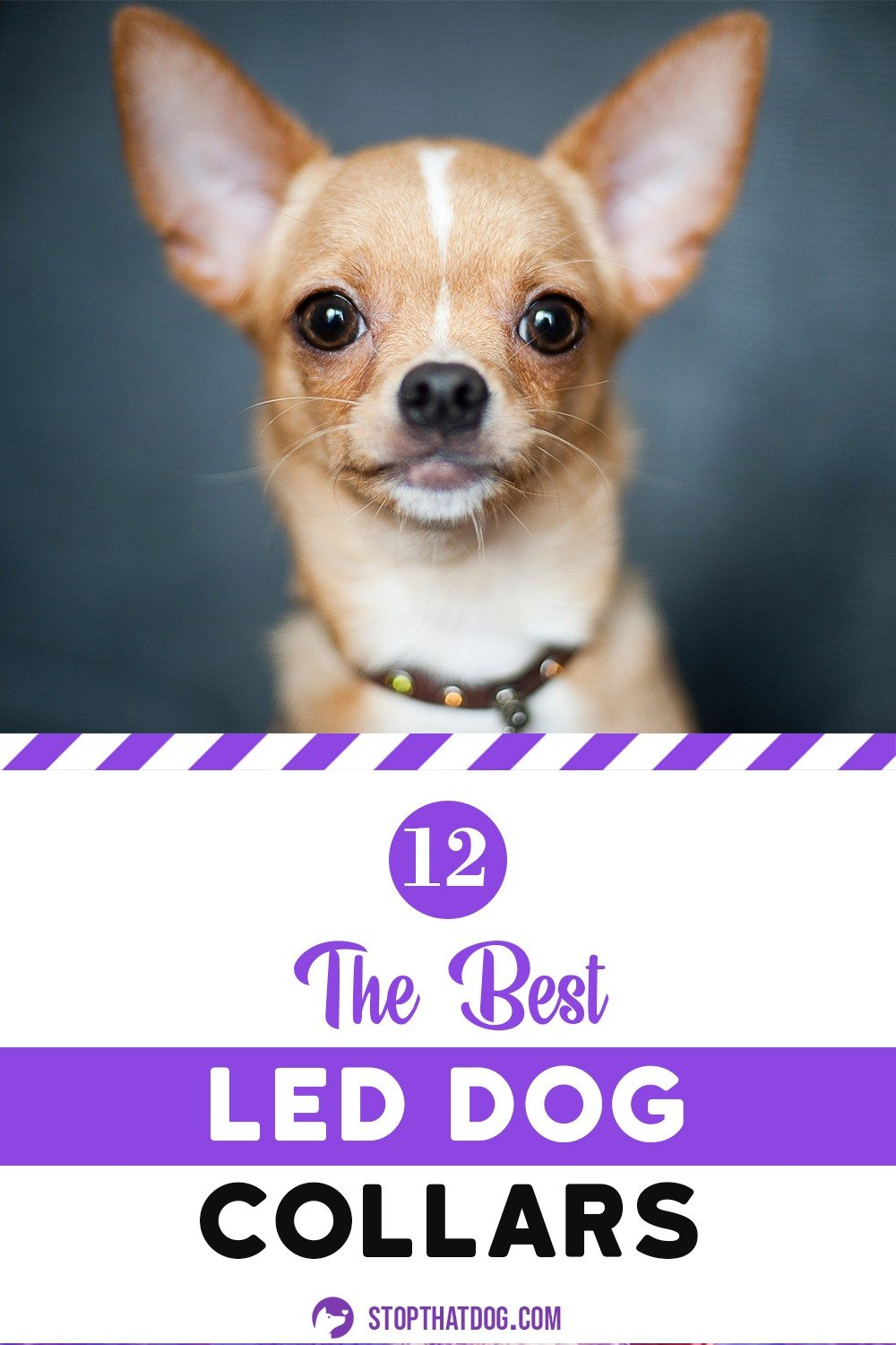 LED dog collars are an excellent way to improve your dog\'s visibility during those twilight hours. This guide highlights the best LED dog collars on the market.