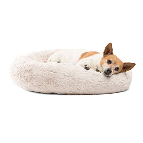 What Are The Best Elevated Dog Beds? (2020) 26