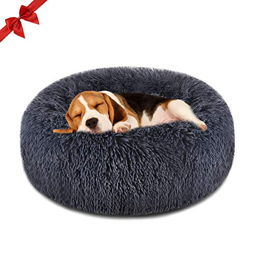 What Are The Best Elevated Dog Beds? (2020) 25
