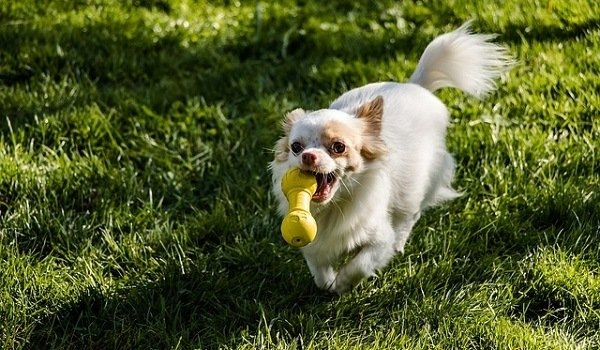How To Teach Your Dog To Put Their Toys Away - A Step By Step Guide 3