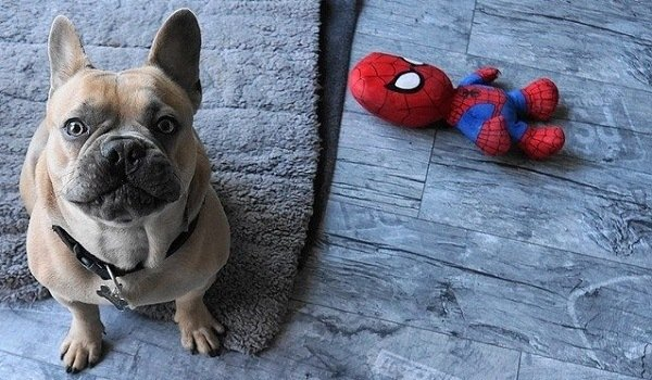 How To Teach Your Dog To Put Their Toys Away - A Step By Step Guide 1