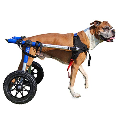 The Best Dog Wheelchairs For Small, Medium, & Large Breeds Reviewed (2020) 5