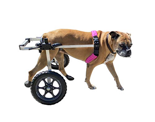 The Best Dog Wheelchairs For Small, Medium, & Large Breeds Reviewed (2020) 1